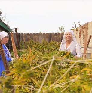 coltivazioni di marijuana in california