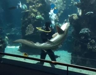 squalo leopardo che si fa fare le coccole 5