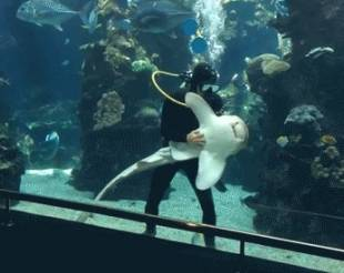 squalo leopardo che si fa fare le coccole 7