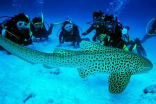 squalo leopardo e sub