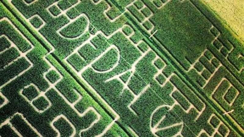 Quest 39 anno migliaia i visitatori dei labirinti 39 effimeri for Labirinto alfonsine