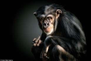la scimmia fa il dito medio