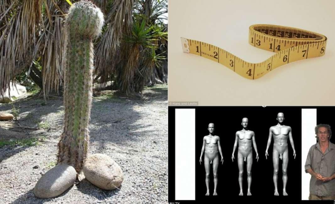 dimensioni del pene per le donne