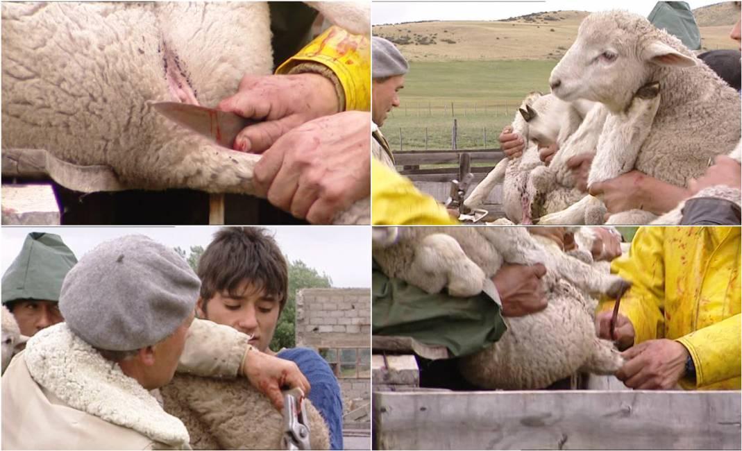 la stilista stella mccartney rinuncia alla lana per le sue ... e77ad8a8bcd
