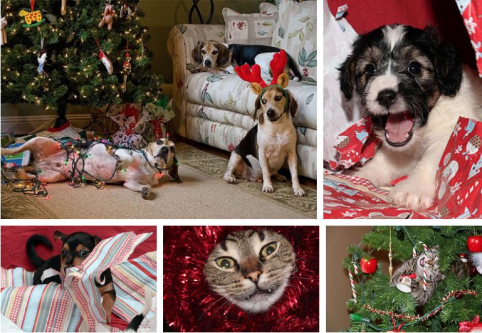 Stella Di Natale Gatti.Animali E Natale Gatti E Cani Sono Creature Adorabili Ma Possono